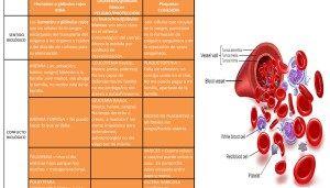 Las principales funciones del riñón son las de filtrar la sangre y eliminar los residuos por la orina, regular la homeostasis, regula el volumen de líquido extracelular y participa en la reabsorción de electrolitos Definición:Órganos (dos) situados en la parte dorsal del abdomen encargados de filtrar la sangre (mediante las nefronas) y producir y eliminar ... Read more...