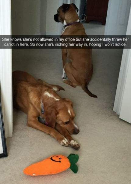 Funny Pics Of Dogs Hilarious So Cute 19 New Ideas