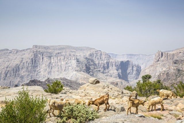 Anantara Al Jabal Al Akhdar Resort Ouvre Ses Portes Dans Les