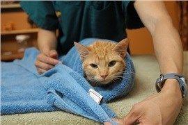 CoolPetZ | Social Pet Network Kedilerde Addison Hastalığı! #kedi #CoolPetZ