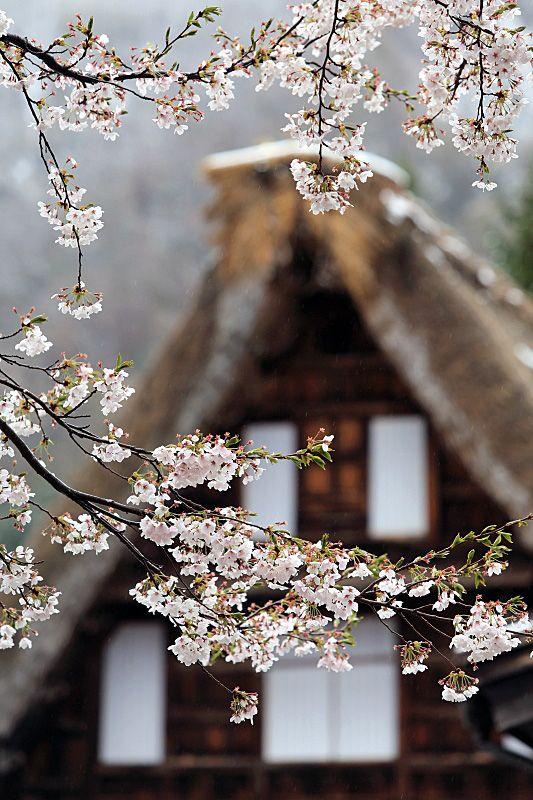 Gokayama, Toyama, Japan。五箇山。富山県。
