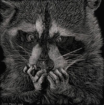 Tara Merkt- My Precious- Scratchboard Purchase/ Contact: chelonidaeartistry@gmail.com- Current Online Art Exhibition - International Gallery Of The Arts (IGOA)