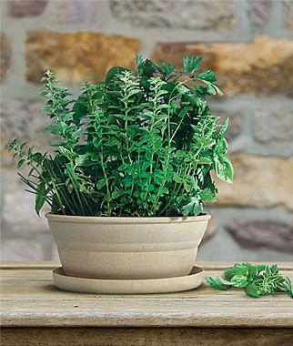 Good Complete Herb Garden Kit   For $10.00 You Can Grow Greek Oregano, Italian  Parsley,