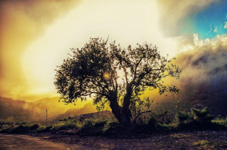 The sun's tree by Franco Romano on 500px