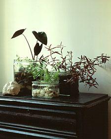 Indoor Water Gardens - Martha Stewart Gardening