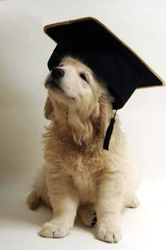 The Golden Graduate - golden retriever puppy.  If male, a blond alumnus. If female, a blonde alumna.   Always use the gender-specific word form.     Gregory Chandler, Attorney at Law