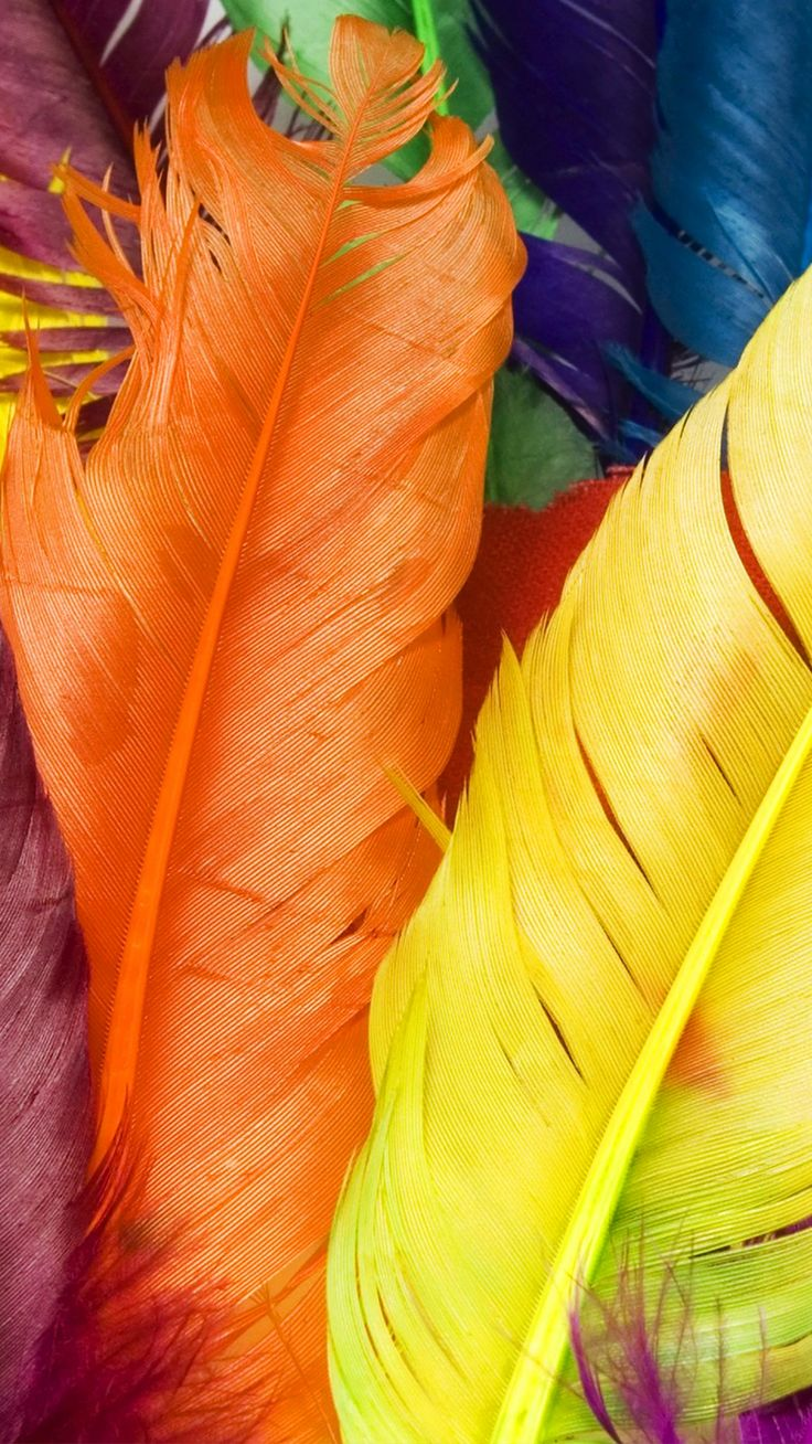 Picture of Colorful Feathers for iPhone 7 Plus Wallpaper