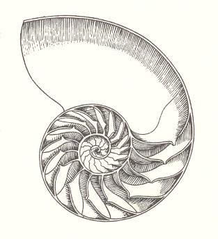 fibonacci tattoo - Google Search                                                                                                                                                                                 More