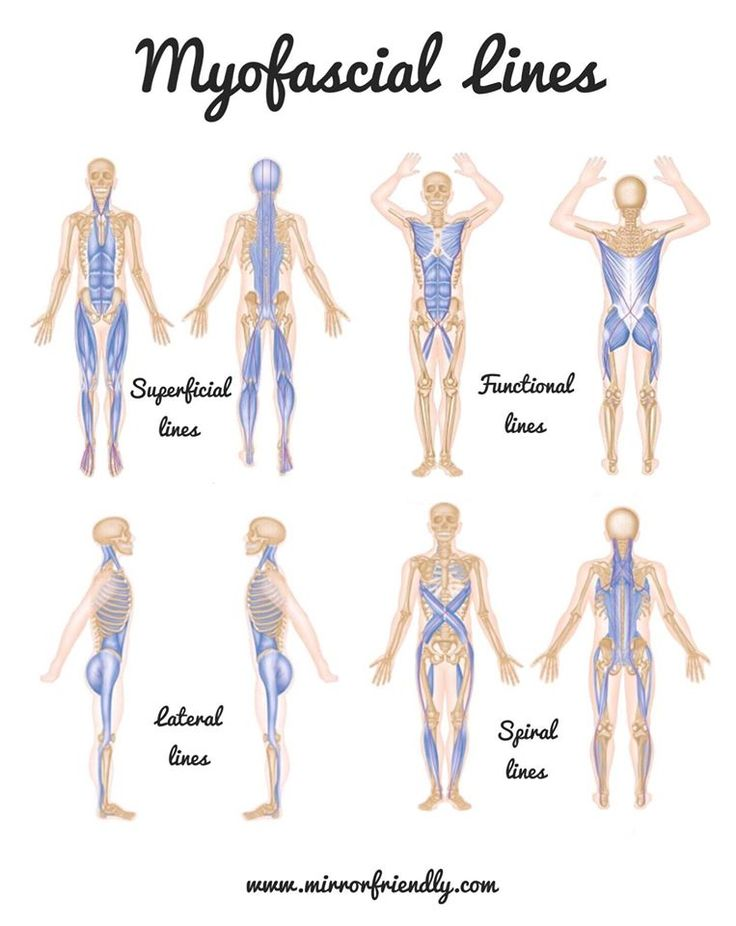 218 best human anatomy images on Pinterest | Physical therapy ...