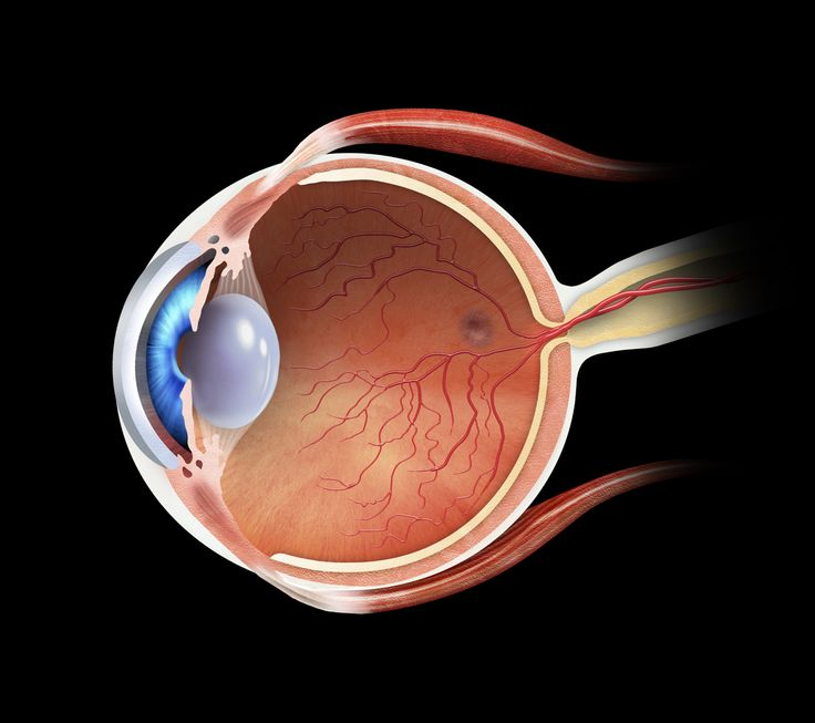Marco Vaglieri • Eye section, 2004