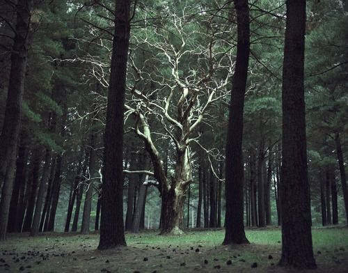 I wonder if: when a person becomes a tree in the Whispering Forest, if they become one which matches their personality.
