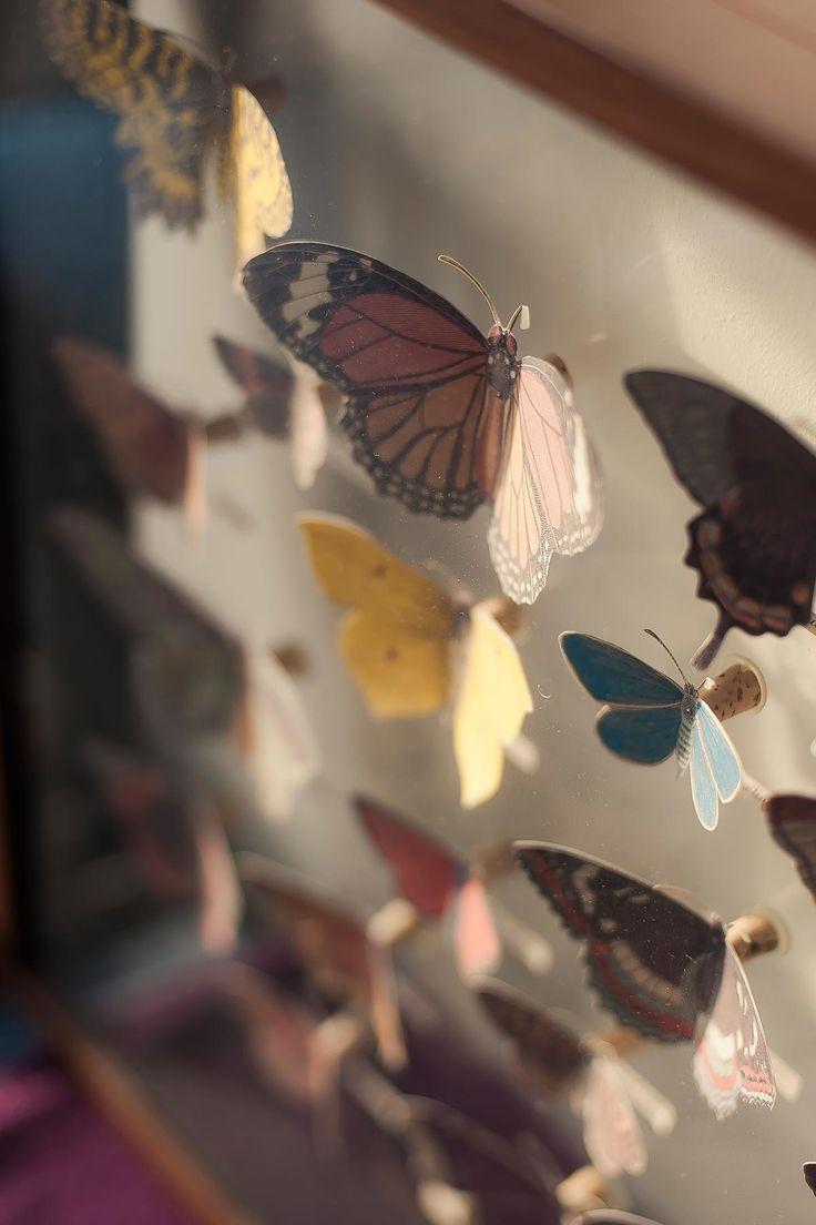 diy vlinderkast