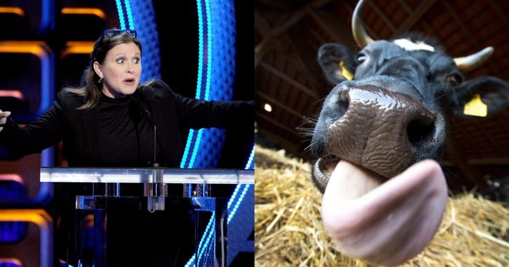 Carrie Fisher sent a cow's tongue to a producer who harassed her friend      When Heather Robinson told her friend Carrie Fisher what happened, she stepped up. http://www.pinknews.co.uk/2017/10/17/star-wars-icon-carrie-fisher-sent-a-cows-tongue-to-a-hollywood-producer-who-harassed-her-friend/?utm_campaign=crowdfire&utm_content=crowdfire&utm_medium=social&utm_source=pinterest