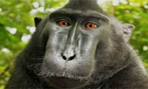 The best photography websites, publications and galleries Where to find out more about contemporary photography, as recommended by the Guardian and Observer's photography criticA screengrab of the monkey 'selfie'