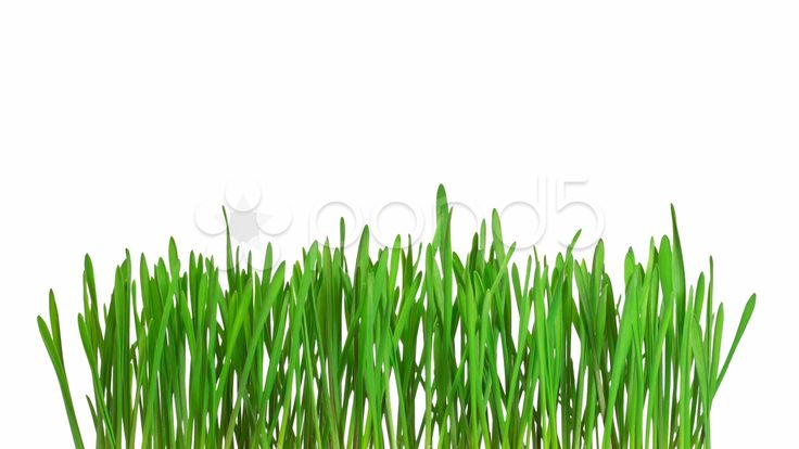 Time-lapse green grass growing - isolated with alpha channel - Stock Footage | by fotosav