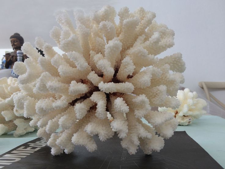 Large Natural Coral Shell Beach Costal Fish Tank Wedding Party Table Decoration