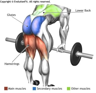 HAMSTRINGS - ROMANIAN DEADLIFT