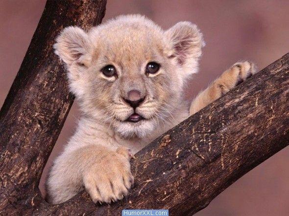 animais | Imagens divertidas - Filhotes de Animais