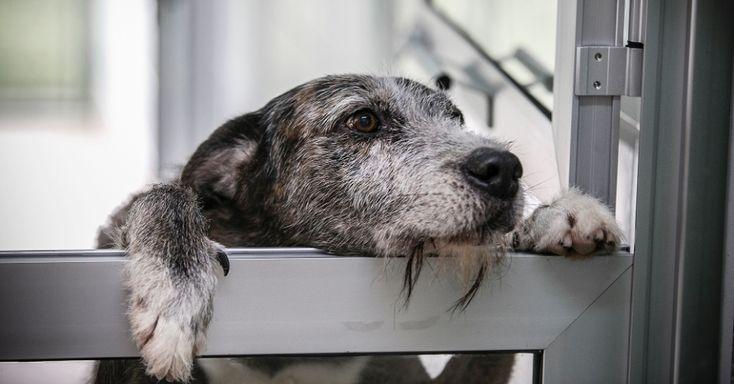 Inaugurado no último dia 29 de janeiro, o novo núcleo de adoção do Centro Municipal de Adoção de Cães e Gatos possui 30 canis e 24 gatis onde os animais serão disponibilizados para adoção. O núcleo está localizado no Centro de Controle de Zoonoses (CCZ-SP), na Rua Santa Eulália, 86, bairro de Santana