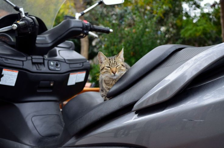 https://fromplacetospace.wordpress.com/2014/11/25/the-city-of-cats/ cat on a bike in Istanbul