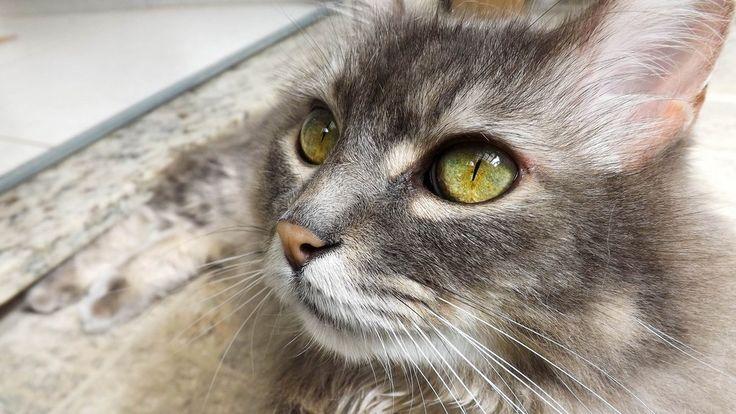 Cat eyes, close up wallpaper