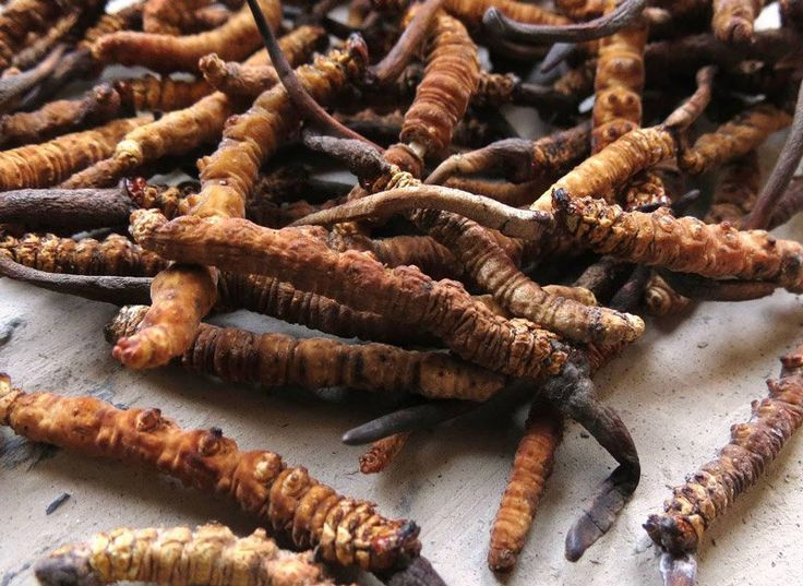 The Craze in #Asia of the Half animal Half plant #herb called Yarsagumba