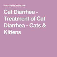 Cat Diarrhea - Treatment of Cat Diarrhea - Cats & Kittens