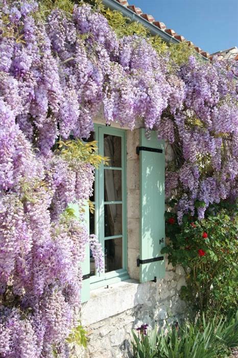 wysteria. pastel window shutters. stone. i'm in love.