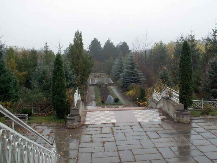 Thuja occidentalis (columna) in arboretum of Beshtaugorsky timber enterprise