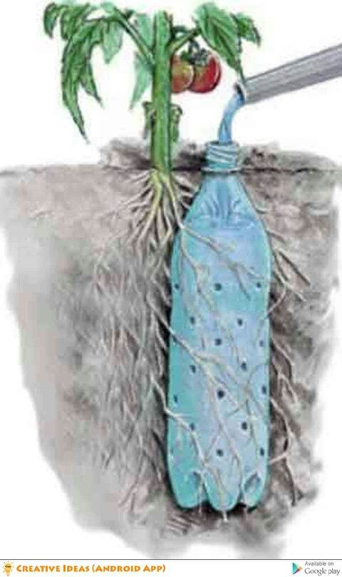 Soda bottle hydration for your plants. Keep your garden well hydrated even in times of drought. Water using this method when you will be away for a while. Plants such as tomatoes require a constant supply of water.