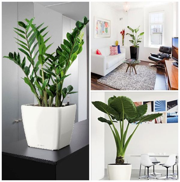Fresh Indoor Plants Decoration Ideas For Interior Home: 124 Best Images About House Plants On Pinterest