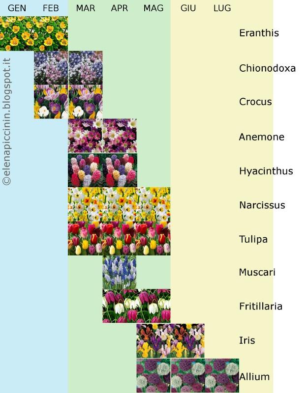 Bulbose: le pianti in autunno e te le godi in primavera. Periodi di fioritura. (c) Elena Piccinin