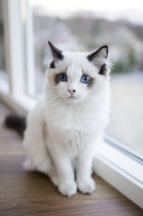 This Is The Most Beautiful Cat I've Ever Seen! | Cutest Paw