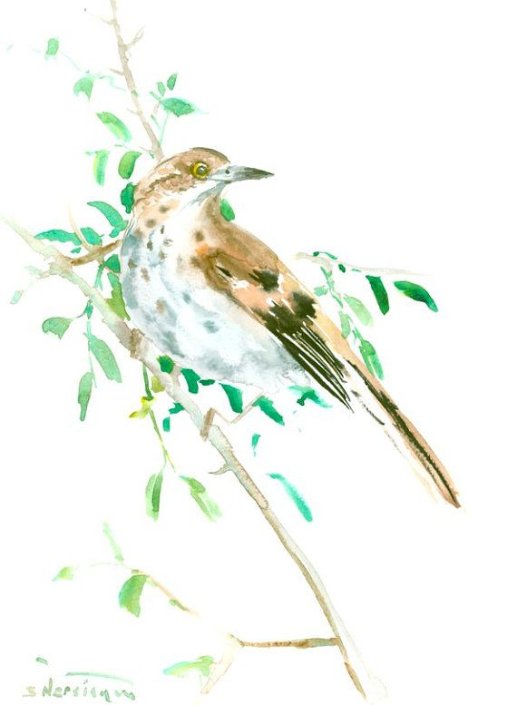 Brown Thrasher bird art original watercolor painting 12 x 9 in