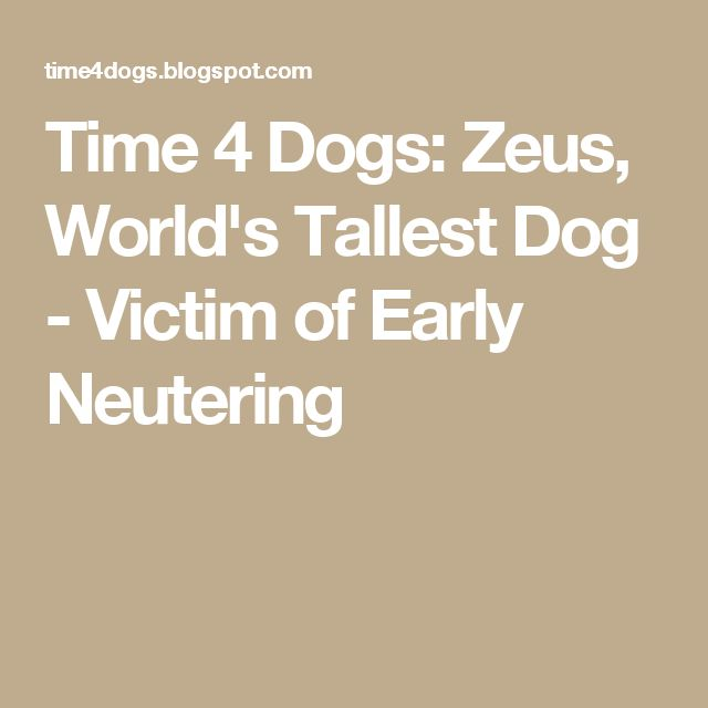 Time 4 Dogs: Zeus, World's Tallest Dog - Victim of Early Neutering