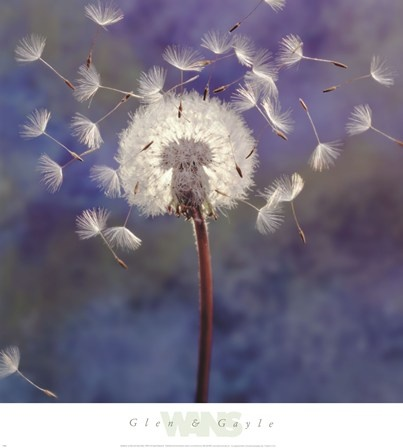 Dandelion Art Print by Glen & gayle Wans at Urban Loft Art