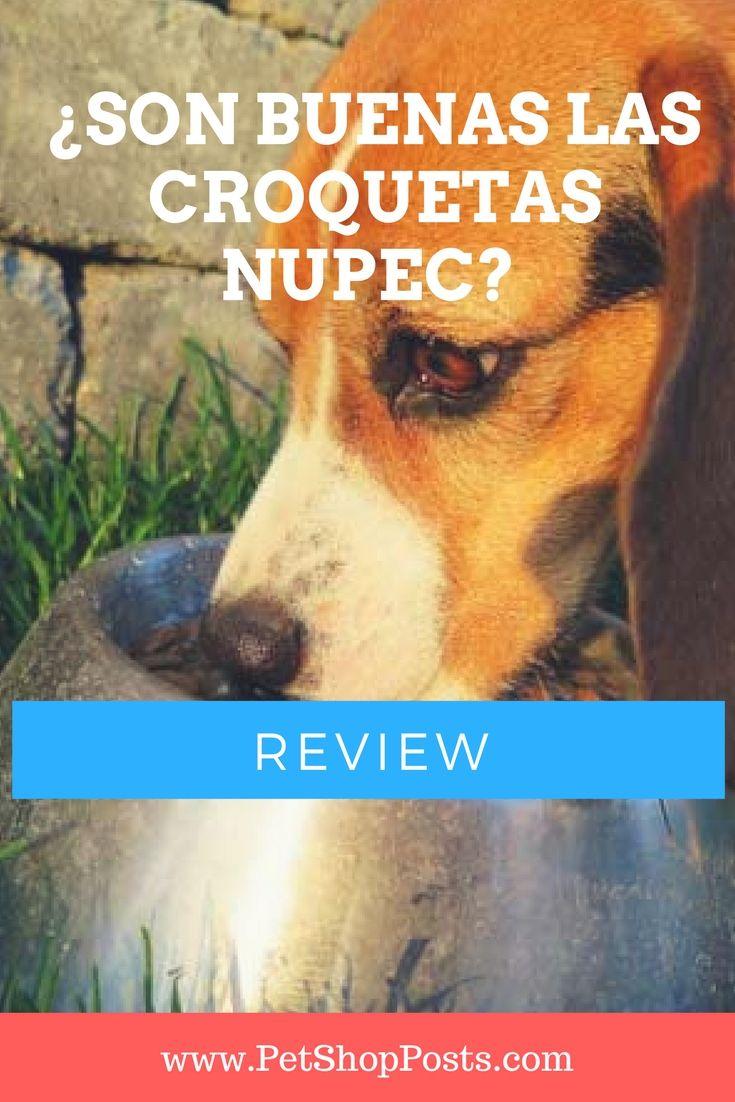 ¿Son buenas la croquetas Nupec?