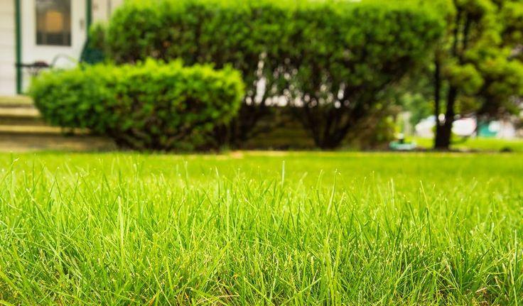 Pięknie przystrzyżona wiosenna trawa - zainspiruj się i sięgnij po kosiarkę! ;-) #design #urządzanie #urząrzaniewnętrz #urządzaniewnętrza #inspiracja #inspiracje #dekoracja #dekoracje #dom #mieszkanie #pokój #aranżacje #aranżacja #aranżacjewnętrz #aranżacjawnętrz #aranżowanie #aranżowaniewnętrz #ozdoby #ogród #ogrody #ogrodnictwo #kwiat #kwiaty #roślina #rośliny #roślinność #trawa #trawnik