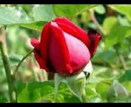 Sana layık kul olamadık www.cafevizyon.com - YouTube