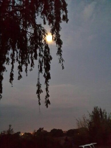 Moon behind willow