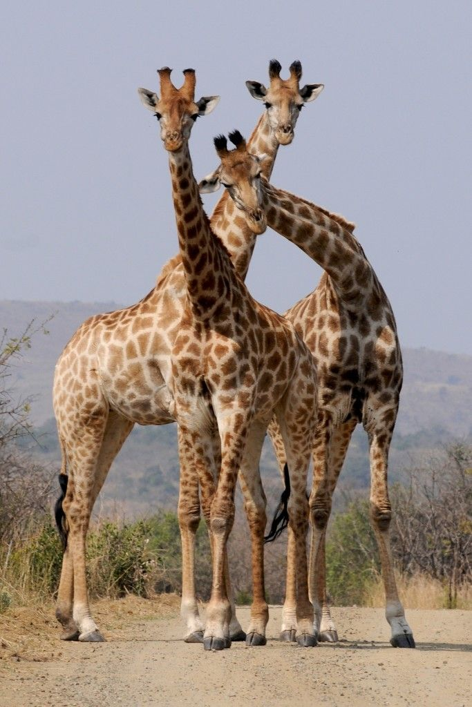 Madrid to Johannesburg, South Africa for just 392 EUR