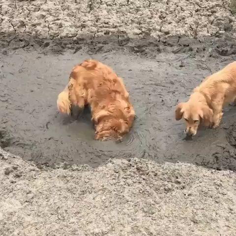 We love mud 🐶❤️😂