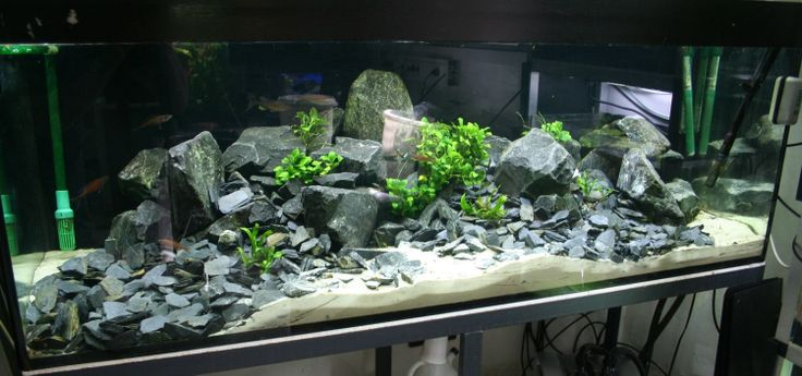 Fish tank with basalt stones aquariums vivariums paludariums teratiums ripariums - Aquarium einrichtungsideen ...