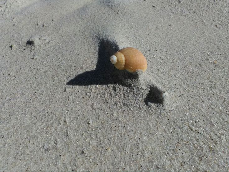 #thepiophotography© #shell #sand #beach #summer #capetown #love #life