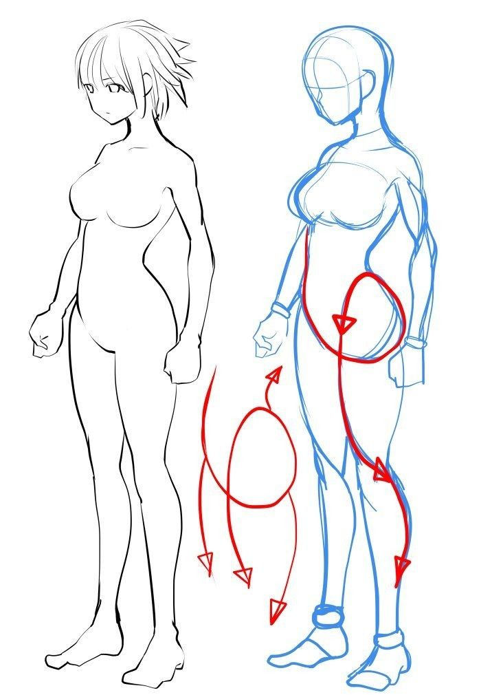Drawing the female body or leg