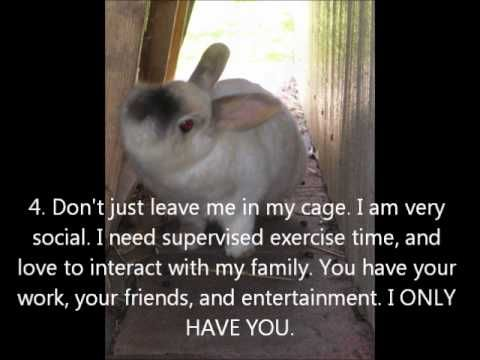 Great watch for learning whether to adopt a bunny and for bunny parents.  The Ten Commandments for Bunny Moms and Dads - YouTube