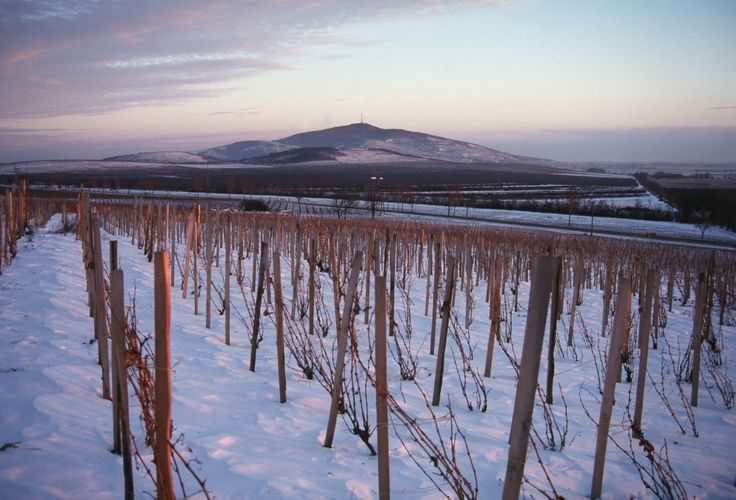 Winter view in Tokaj
