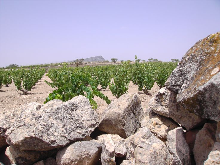 Casa de las Especias Cómo nos gusta la primavera, el calor y el vino!!  In Todovino.com we love summer, heat and wine.