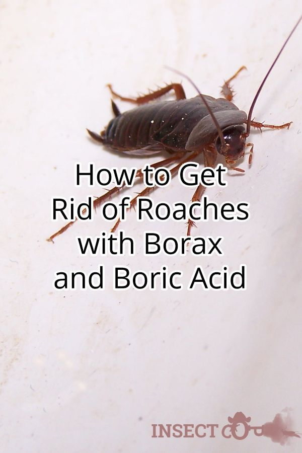 Pin On Get Rid Of Roaches