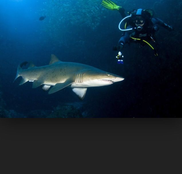 My favourite scuba shot! South west rocks dive location.  Amazing dive site and location for fish rock cave!